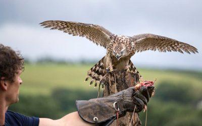 British Birds of Prey Centre opens