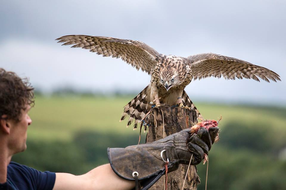 British Birds of Prey Centre opens in National Botanic Garden of Wales